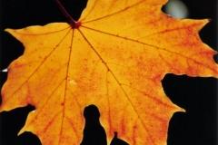 """Torsten - """"Herbst"""""""
