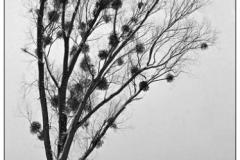 """derThomas - """"Chiemsee im Winter (5)"""""""