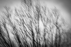 """johannes - """"april blur II"""""""