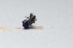 "Georg - ""Insekt 2"""