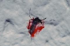 """Georg - """"Mein Blut"""""""