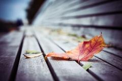 """- """"warmer Herbst"""""""