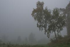 """Torsten - """"Herbstmorgen 2"""""""
