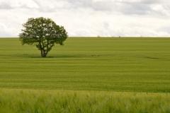 """Torsten - """"Landschaft I"""""""