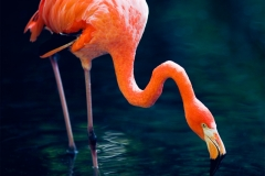 """Steffen - """"flamingo nip"""""""