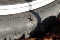 """ElCaracho - """"Spinne auf Reifen"""""""