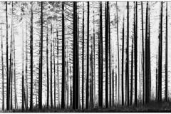 """derThomas - """"Wald"""""""