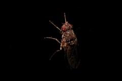 "Georg - ""Insekt 4"""